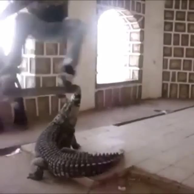 12568942 182305265467862 972596872 n - Tag the homies that #DGAF about skating with crocodiles/alligators  Repost from ...