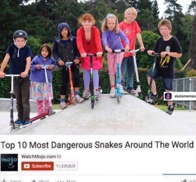 16110994 390942641257627 2282040223149850624 n - Tag a scooter snake via @skatememes...